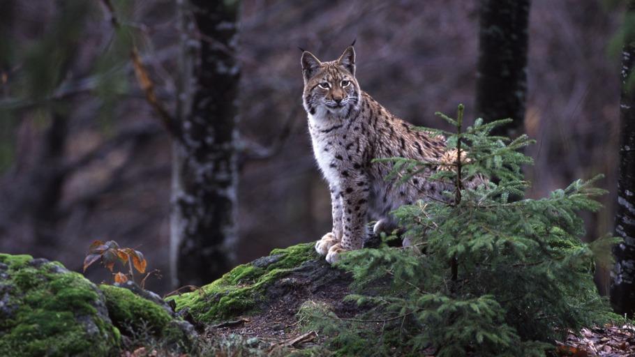 Tierwelt Live Wilde Heimat 1